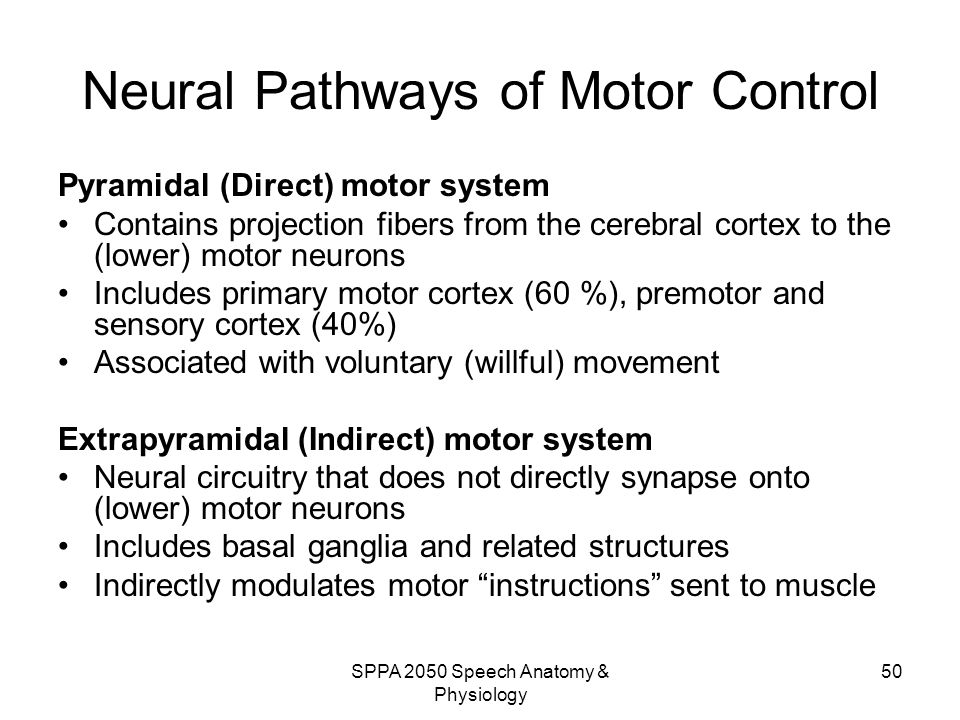 Neural Pathways of Motor Control