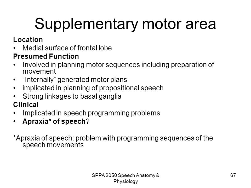 Supplementary motor area