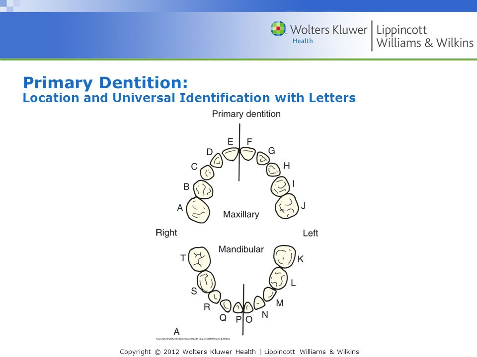 Chapter 6 primary and mixed dentition ppt video online download 4 primary dentition location and universal identification with letters ccuart Choice Image