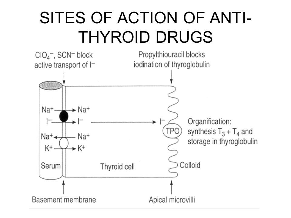 SITES OF ACTION OF ANTI-THYROID DRUGS