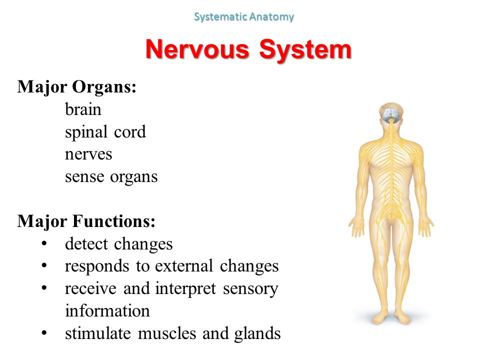 All about the central nervous system