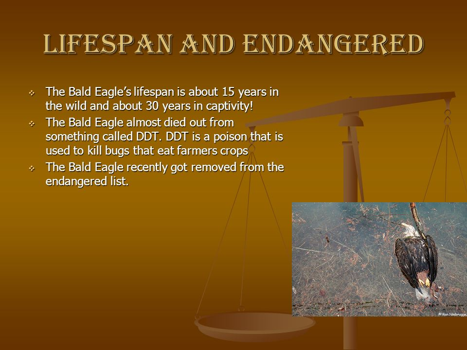 Lifespan and endangered