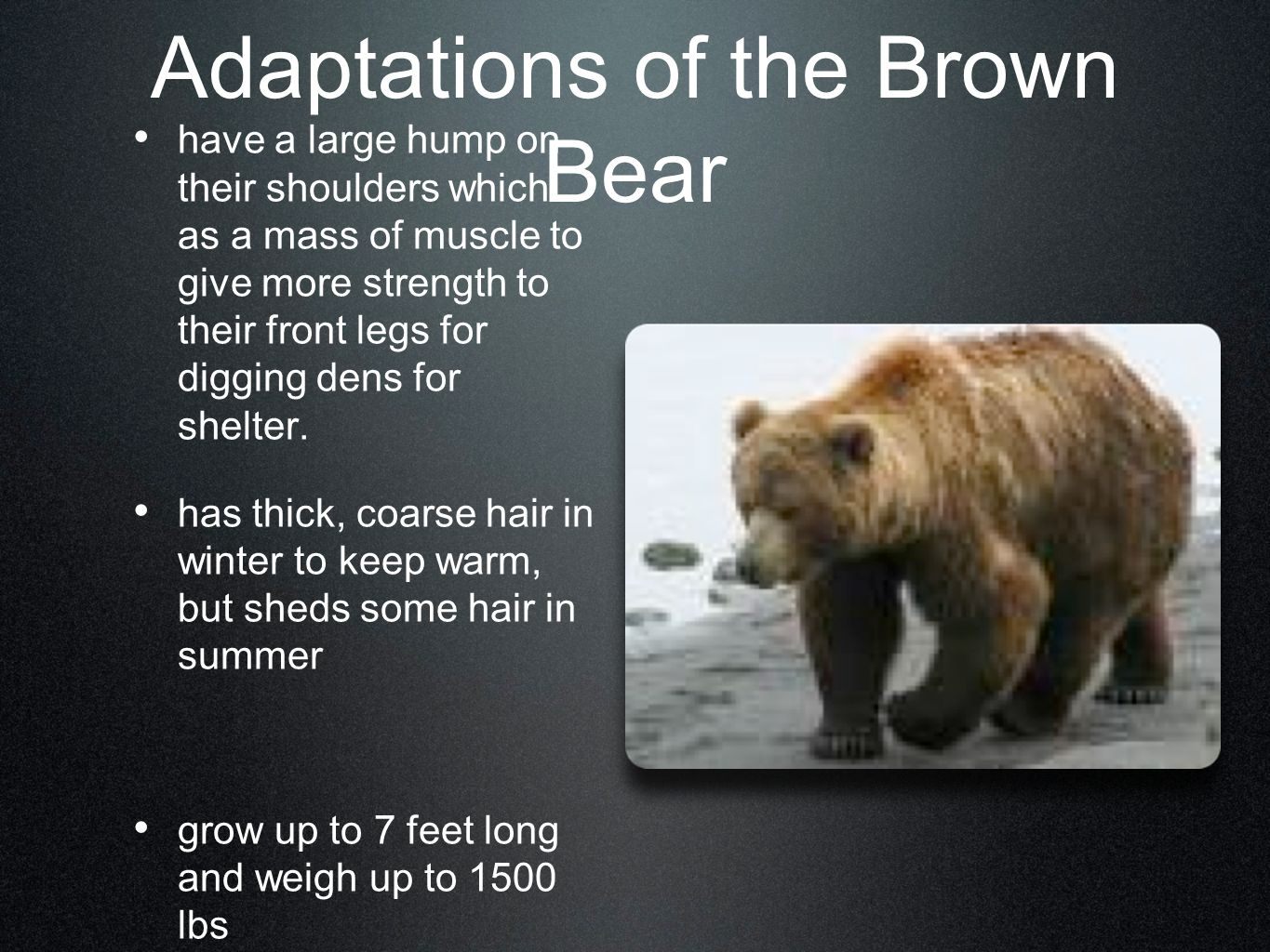 Animals Of The Deciduous Forest Ppt Video Online Download