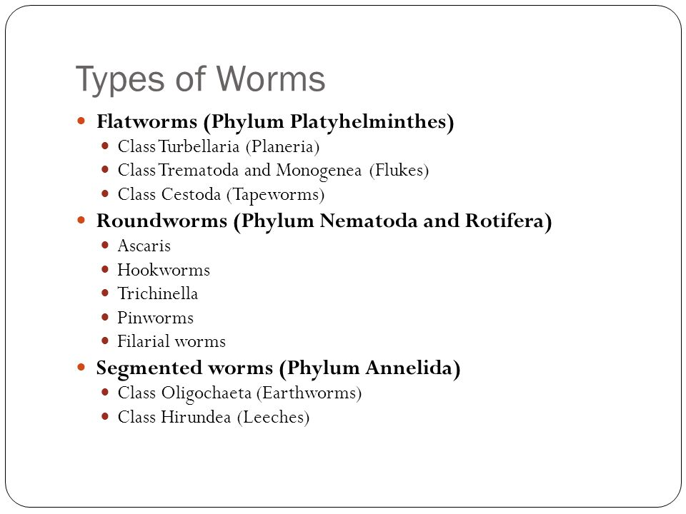 Flatworms Roundworms S...
