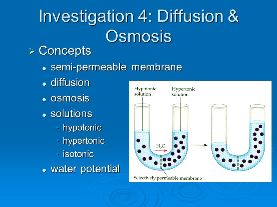 Investigation osmosis in potato cells