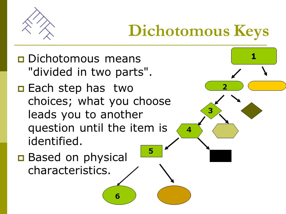 dichotomous key In this lab, students will be introduced to the concept of a dichotomous key through the use of preliminary activities modeled by the teacher they will then learn about the ecology and biology of selected marine mollusks, before putting their dichotomous key reading skills to the test on 8 or 12.