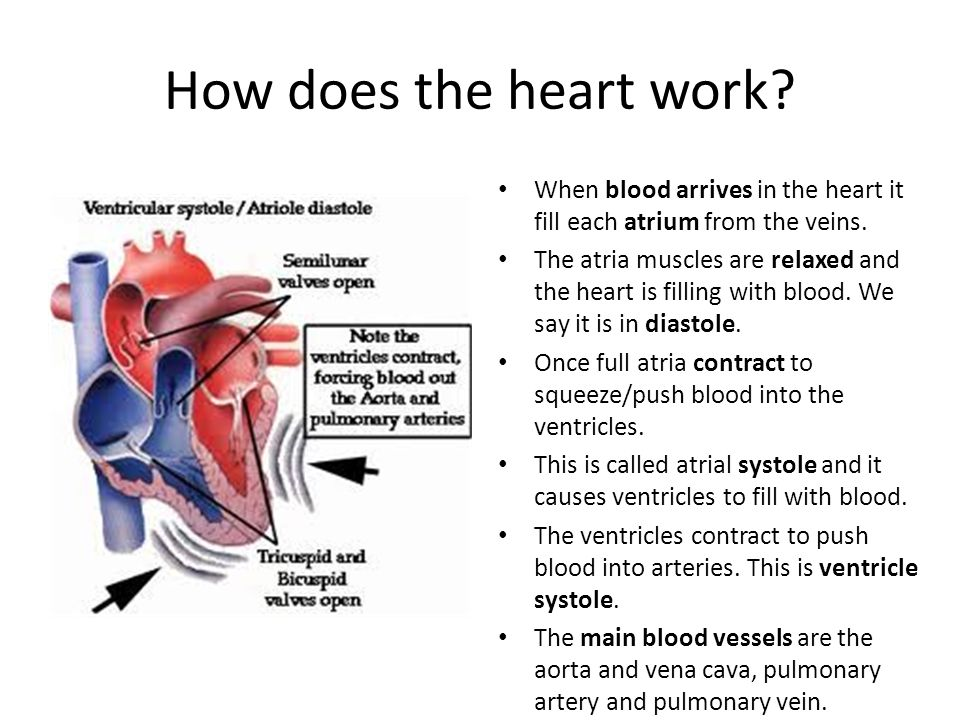 What is double circulation ppt video online download how does the heart work when blood arrives in the heart it fill each atrium from ccuart Images