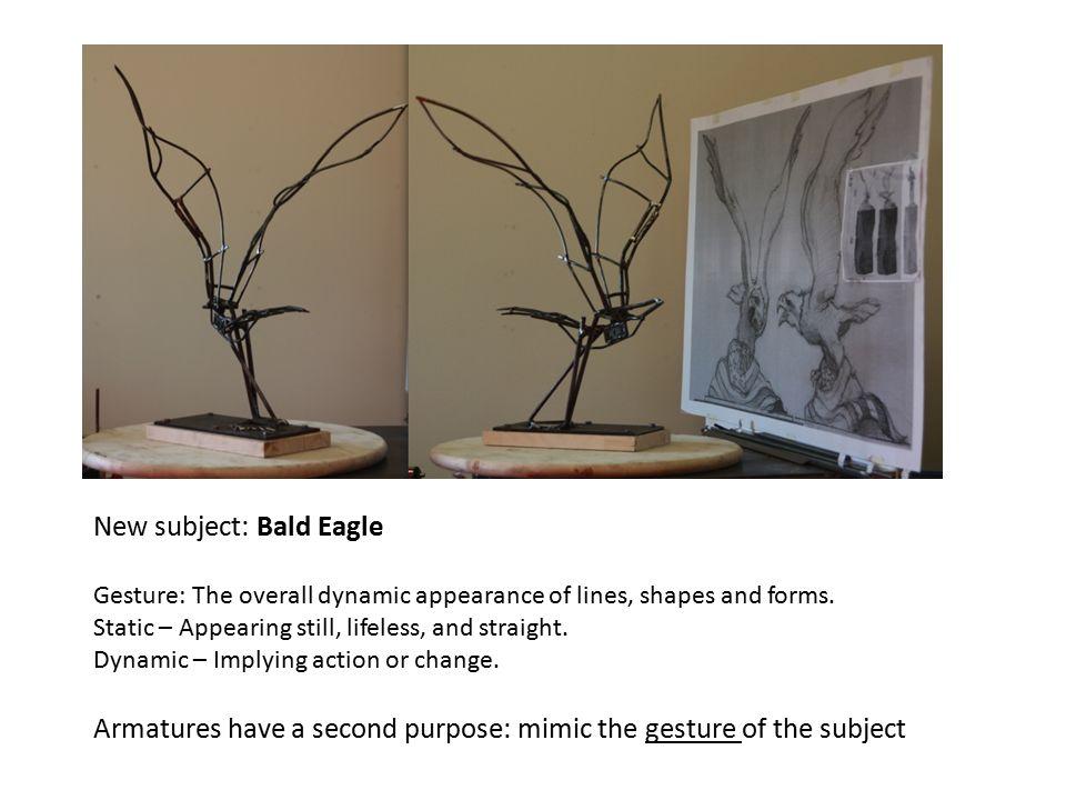 New subject: Bald Eagle