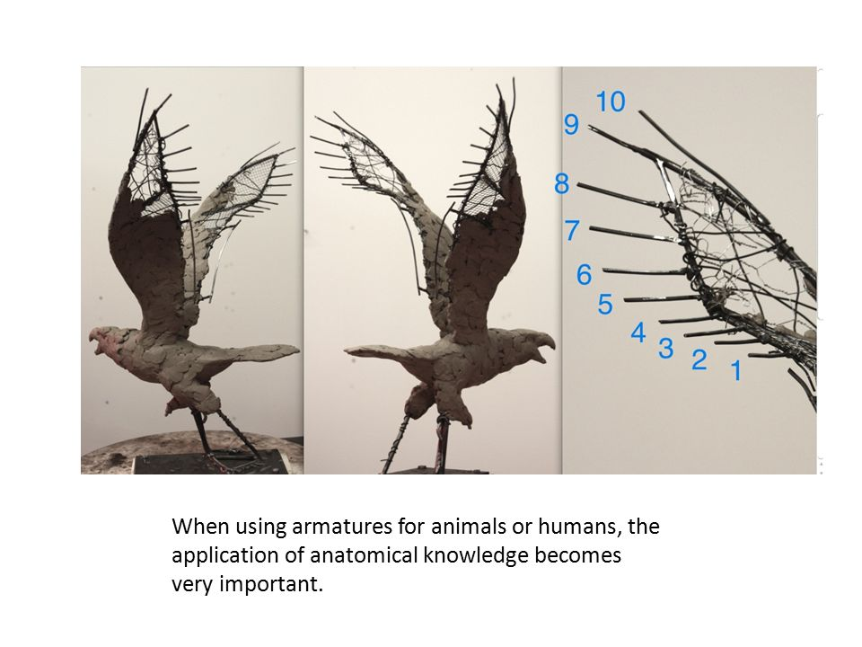 When using armatures for animals or humans, the application of anatomical knowledge becomes very important.
