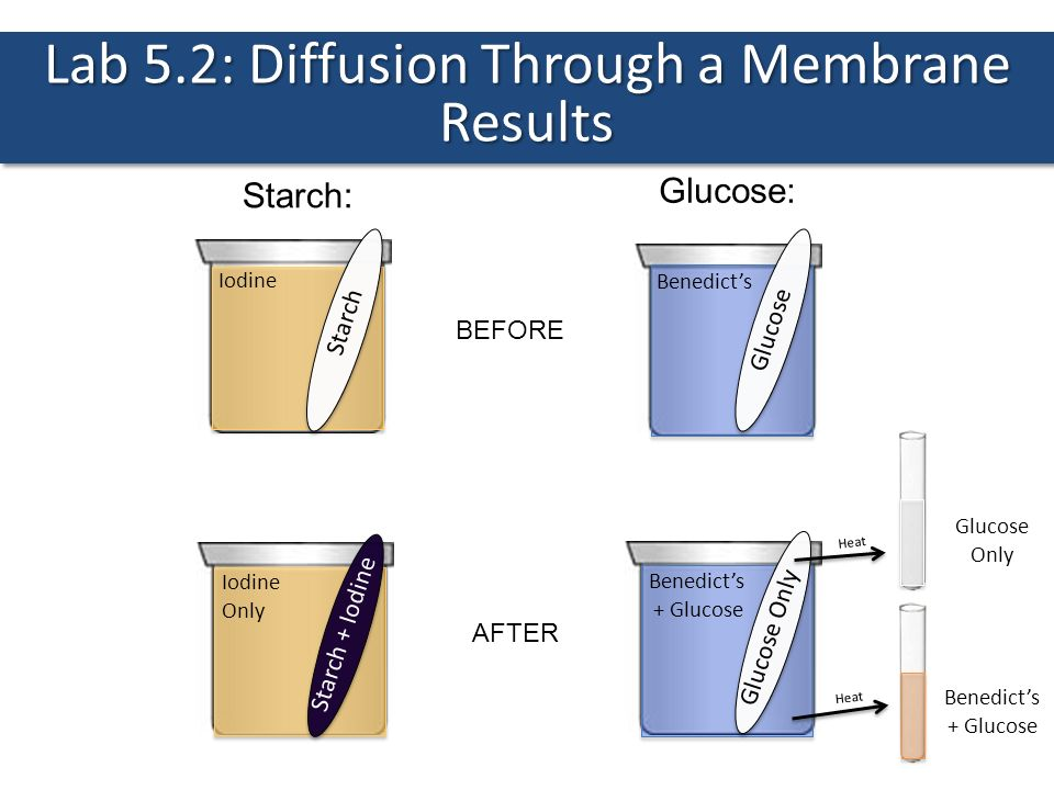 Lab 5.2: Diffusion Through a Membrane Results - ppt download