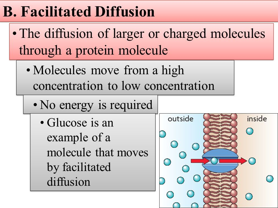 Facilitated Diffusion Example Choice Image - example cover letter