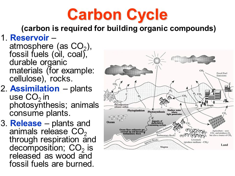 Carbon Cycle (carbon is required for building organic compounds)