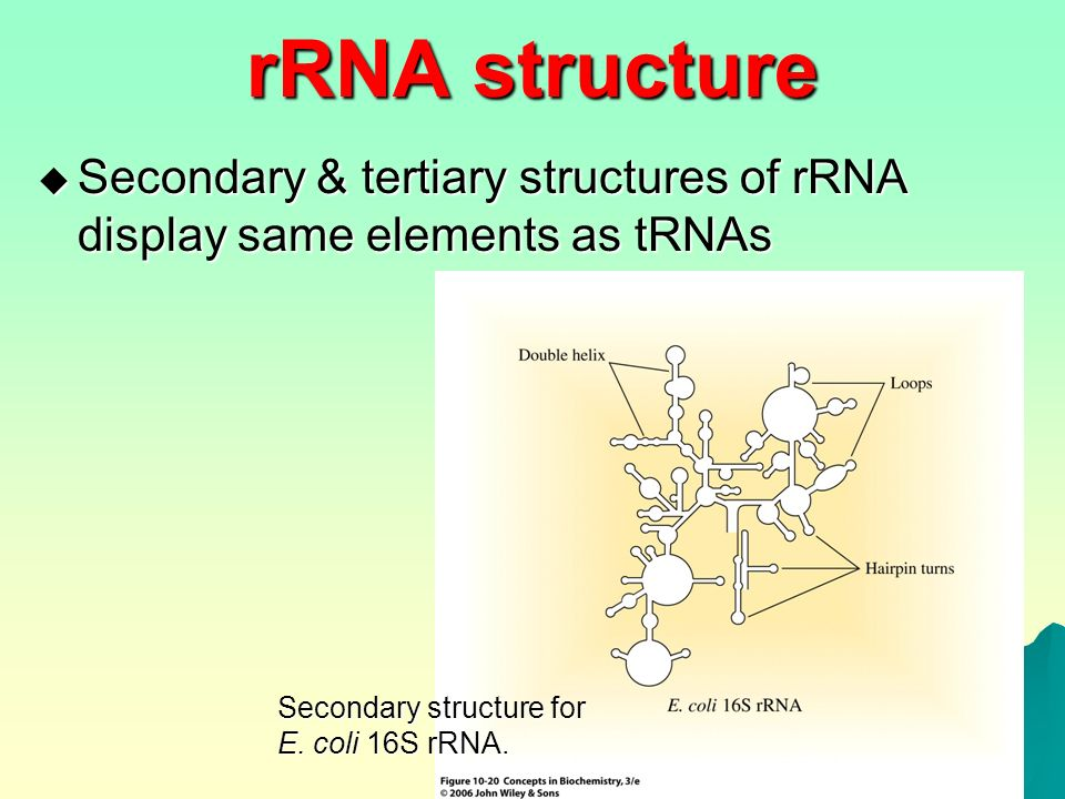 NUCLEIC ACIDS (2). - ppt video online download