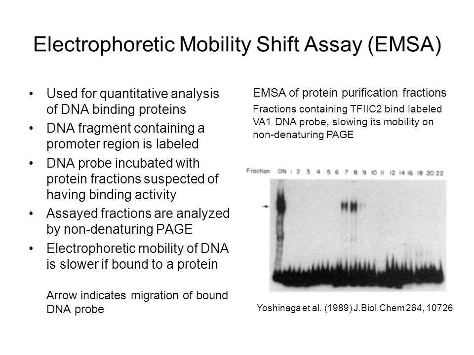 electrophoretic mobility shift assay The electrophoretic mobility shift assay (emsa), or gel mobility shift assay, is a popular and powerful technique for the detection of rna-protein interactions.