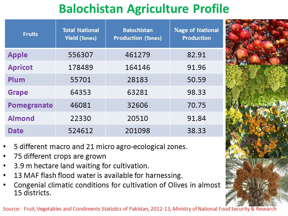 Investment Prospects In Balochistan Ppt Video Online