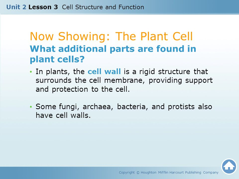 Unit 2 lesson 3 cell structure and function ppt video online now showing the plant cell ccuart