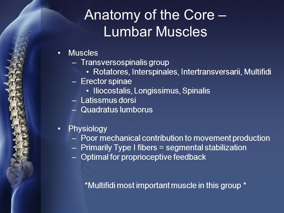 Anatomy of the core