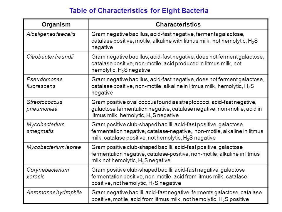 Mycobacterium  Definition of Mycobacterium by MerriamWebster