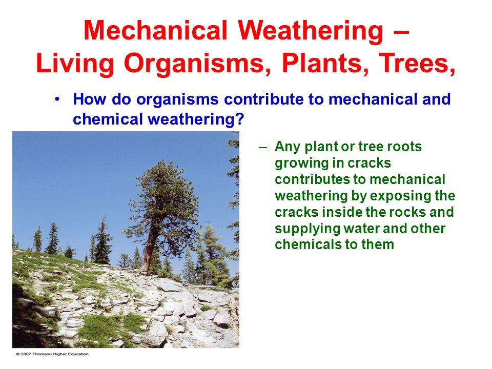 Weathering, Soil, Sendimentary, Metamorphic rocks - ppt ...