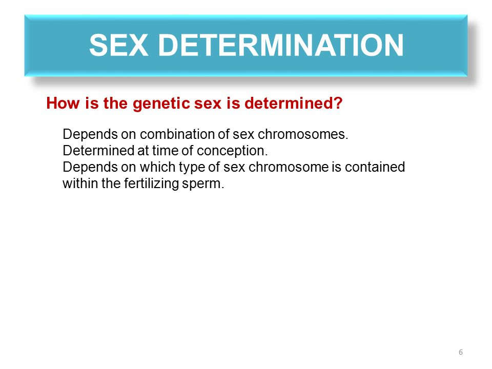 Sex determination harsh environment sperm