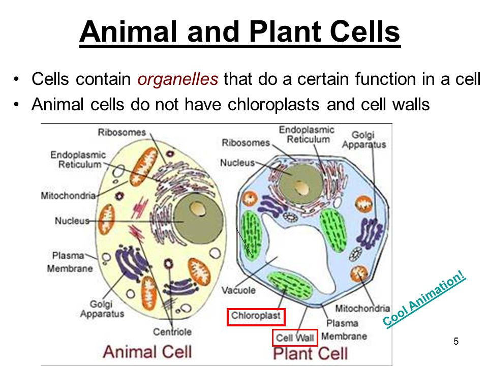 Structure and Function in Animals and Plants - ppt video ...