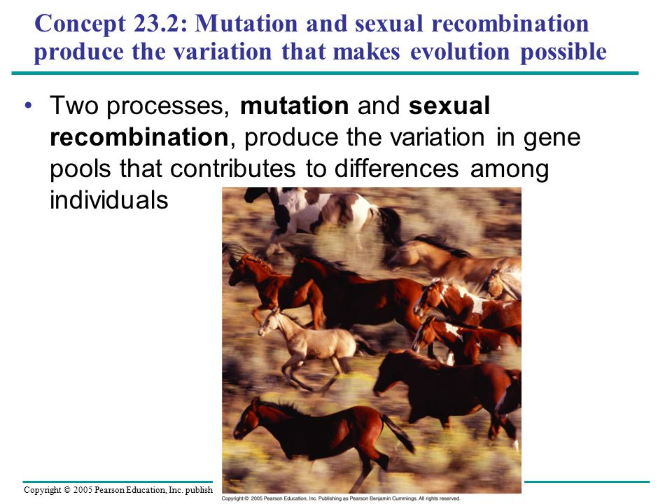 Concept 23.2: Mutation and sexual recombination produce the variation that makes evolution possible