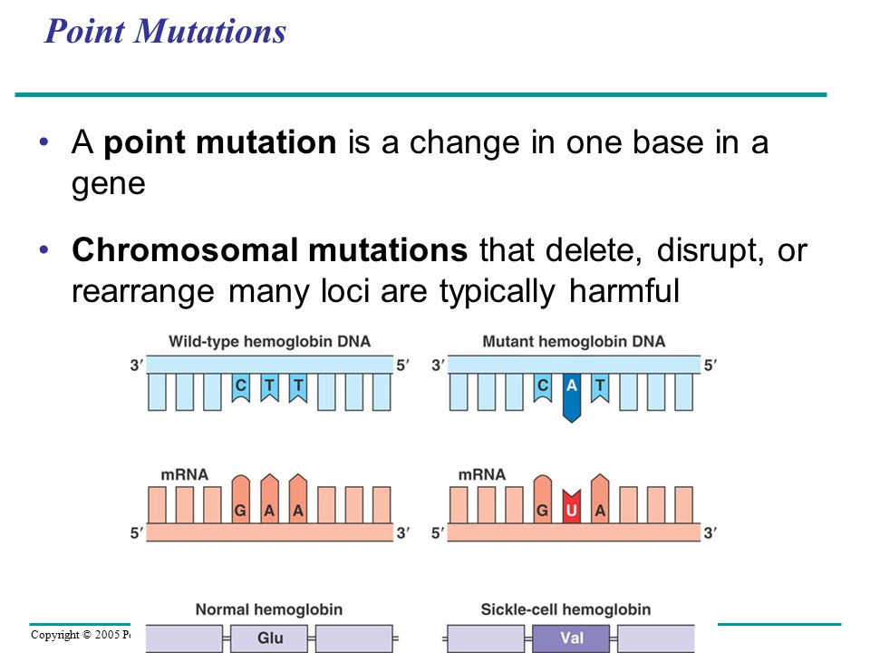 Point Mutations A point mutation is a change in one base in a gene