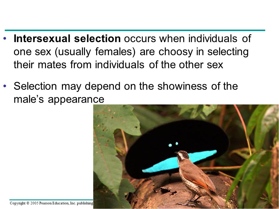 Intersexual selection occurs when individuals of one sex (usually females) are choosy in selecting their mates from individuals of the other sex