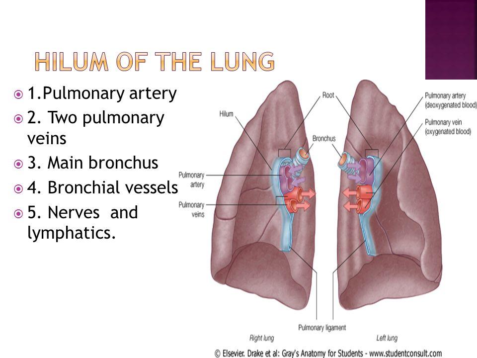 Schön Lungenanatomie Ppt Fotos - Anatomie Von Menschlichen ...