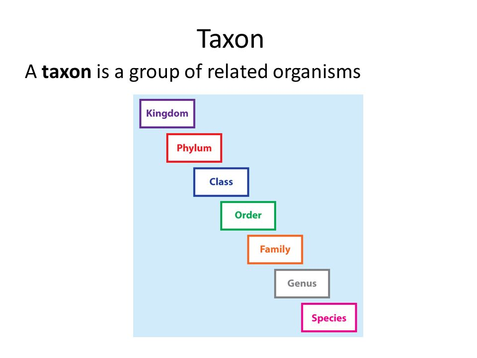 Taxon A taxon is a group of related organisms