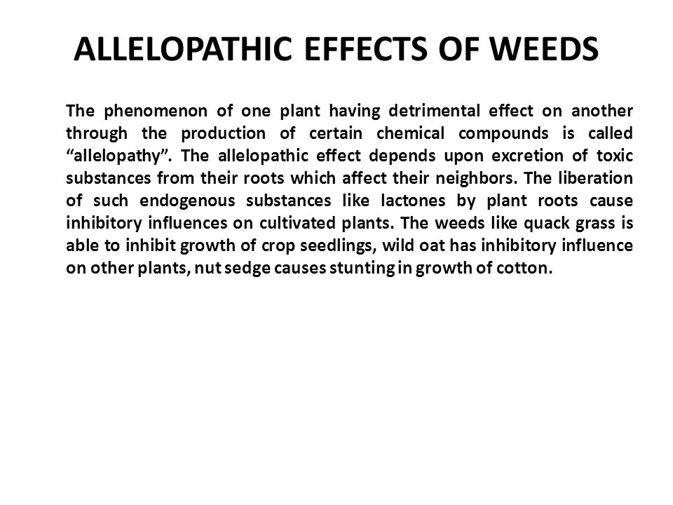 the allelopathic effects of plants Success of invasive plants is the novel weapons hypothesis, which states that the allelopathic chemicals released by an invasive species more effectively inhibit plants outside of that species' native range than.