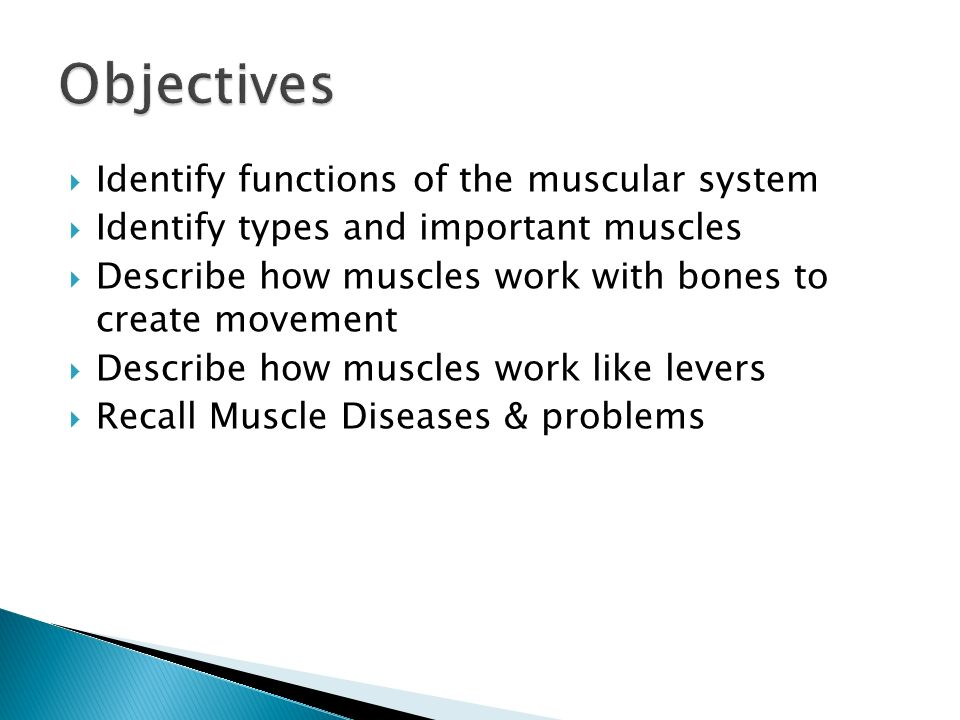 the systems of the human body - ppt download, Muscles