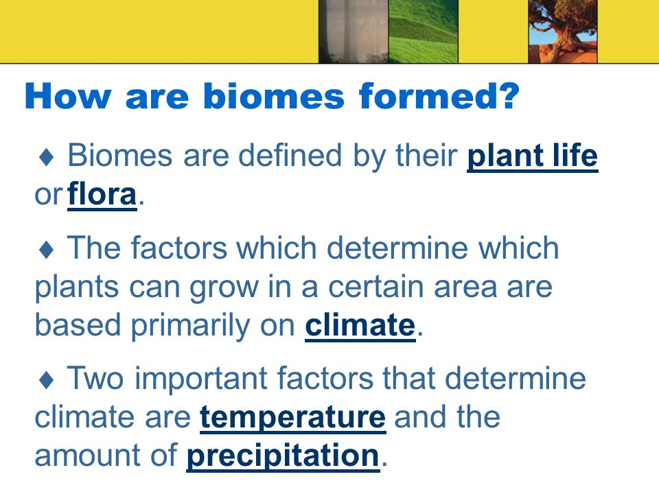 How are biomes formed  Biomes are defined by their plant life or flora.