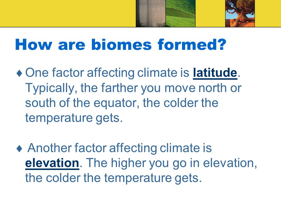 How are biomes formed