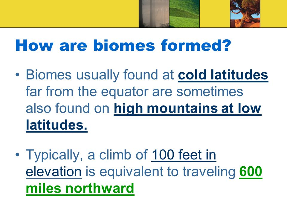 How are biomes formed Biomes usually found at cold latitudes far from the equator are sometimes also found on high mountains at low latitudes.