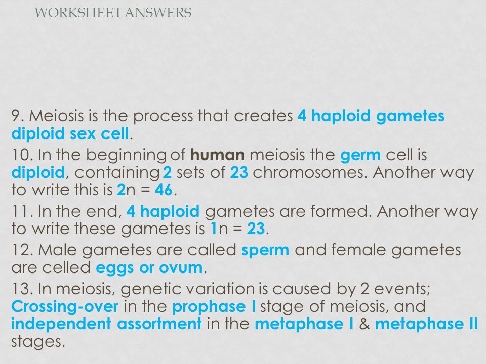 Meiosis Directed Reading ppt video online download – Meiosis Worksheet Key