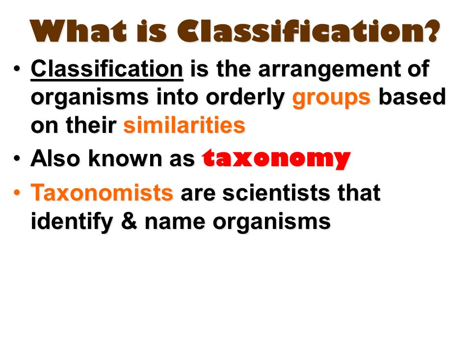 Classification and Taxonomy Honors Biology Ms Kim ppt video – Classification Worksheet Biology