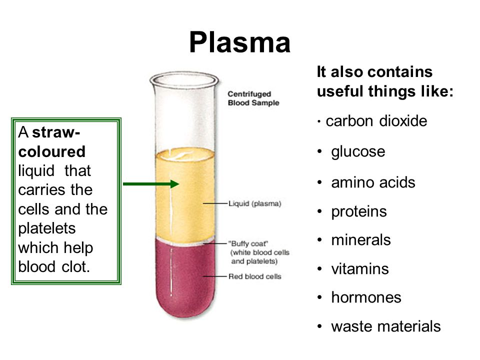 Plasma It also contains useful things like: glucose