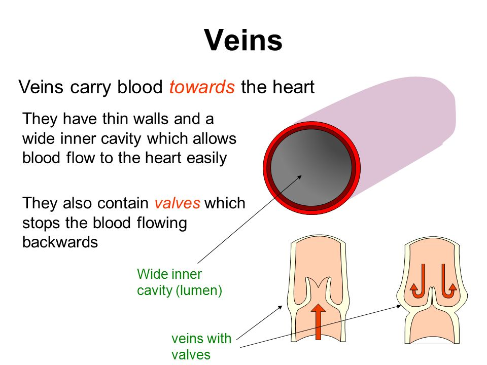 Veins Veins carry blood towards the heart