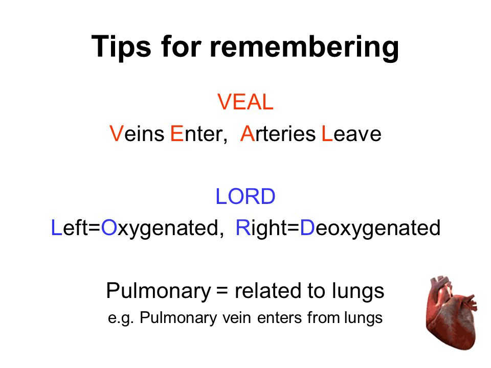 Tips for remembering VEAL Veins Enter, Arteries Leave LORD