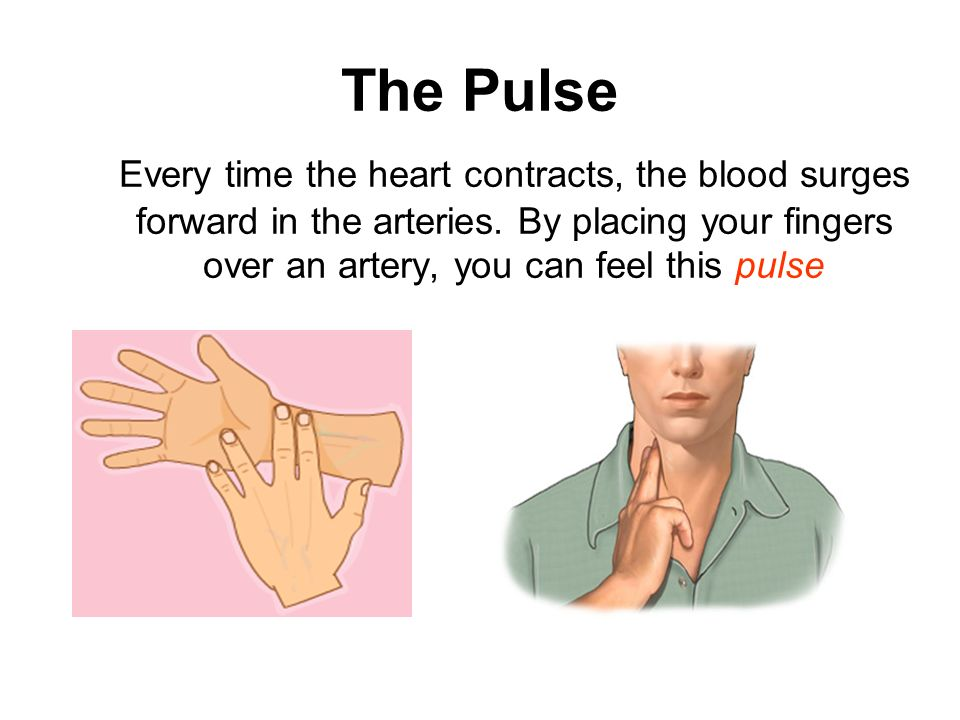The Pulse Every time the heart contracts, the blood surges forward in the arteries. By placing your fingers over an artery, you can feel this pulse.