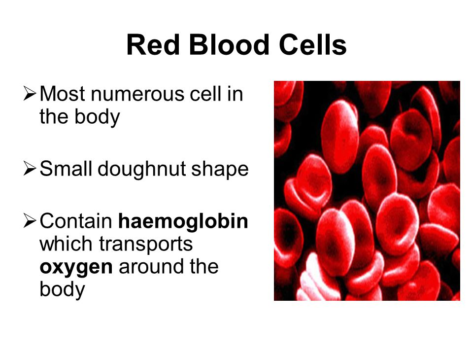 Red Blood Cells Most numerous cell in the body Small doughnut shape