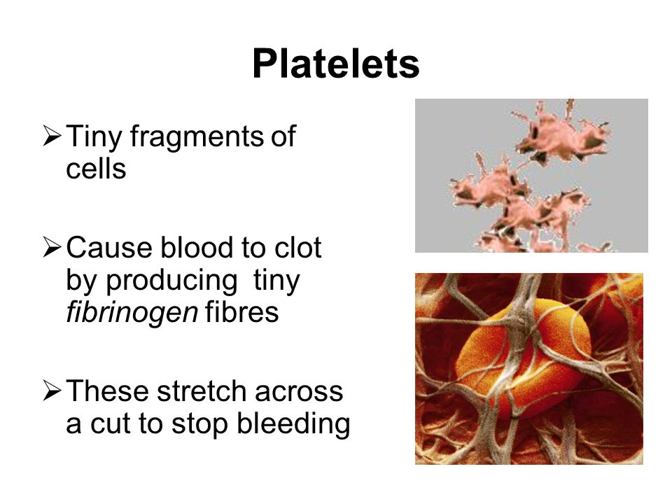 Platelets Tiny fragments of cells