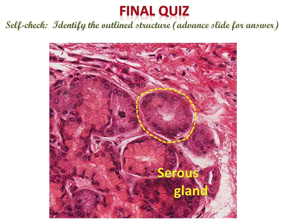 Final quiz Serous gland