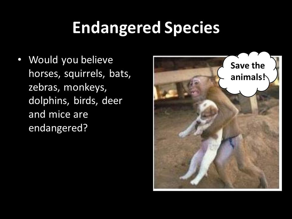 Endangered Species Would you believe horses, squirrels, bats, zebras, monkeys, dolphins, birds, deer and mice are endangered