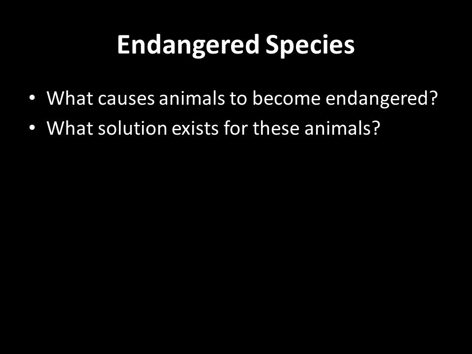 Endangered Species What causes animals to become endangered