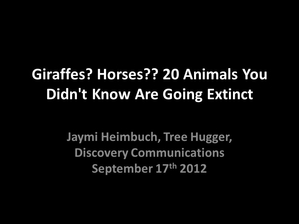 Giraffes Horses 20 Animals You Didn t Know Are Going Extinct