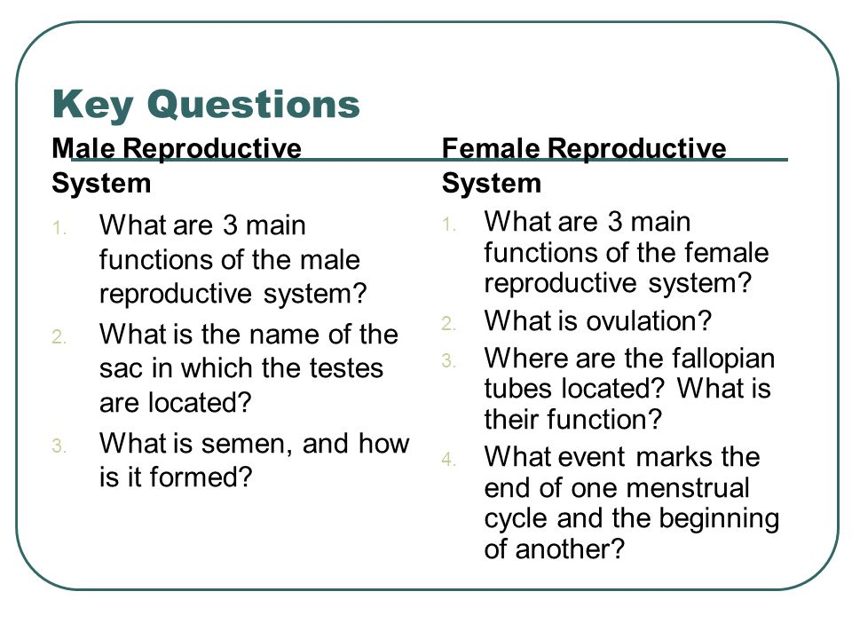male reproductive system essay questions Human reproduction questions for your custom printable tests and  which sequence correctly describes the route sperm take through the human male reproductive system.