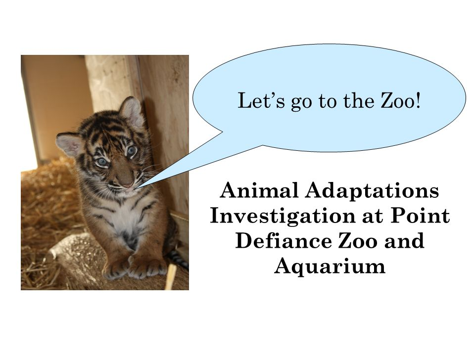 Animal Adaptations Investigation At Point Defiance Zoo And