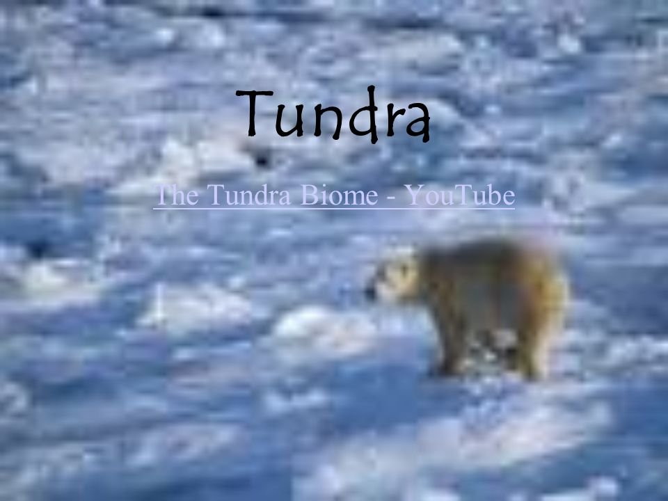 0908d6ecc68 The Tundra Biome - YouTube - ppt video online download